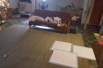 Pet Friendly Watchdog Pet Sitting
