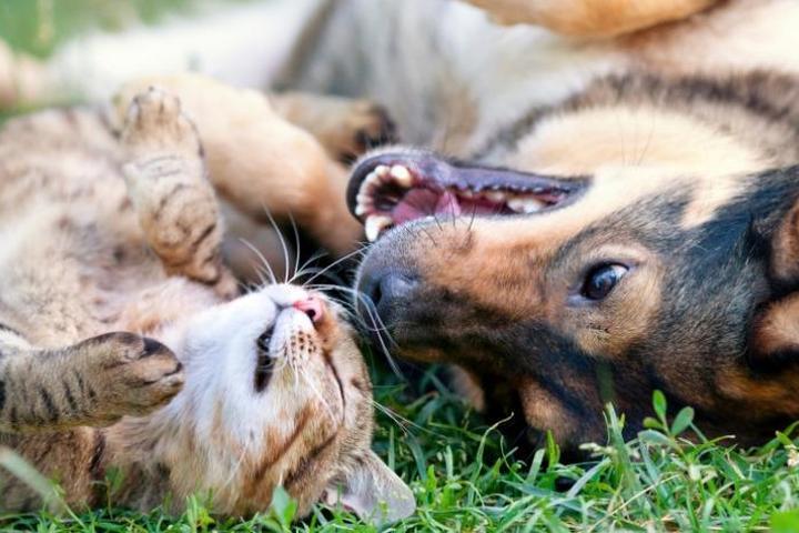 Pet Friendly AMG A Pet Resort