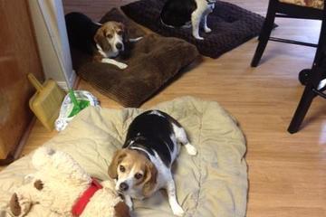 Pet Friendly Four Paws Companions LLC