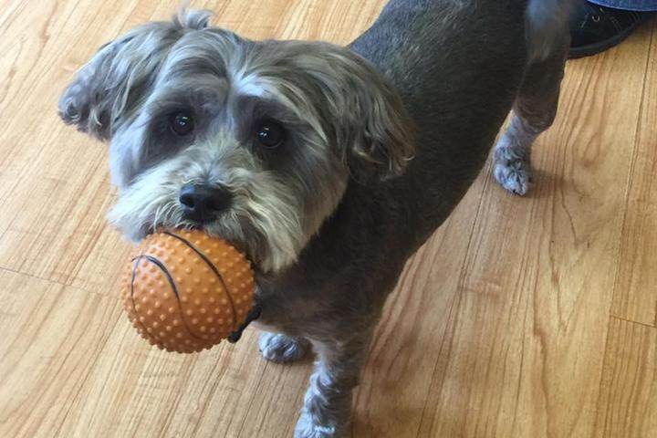 Pet Friendly Tender Loving Care Animal Hospital
