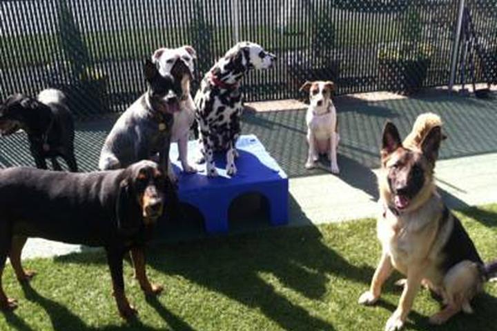 Pet Friendly Happy Dog South Sound