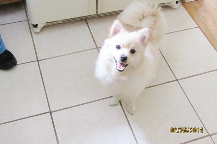 Pet Friendly Linda's Dog Walking and Pet Sitting