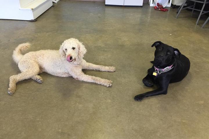 Pet Friendly Whole Dog University, LLC