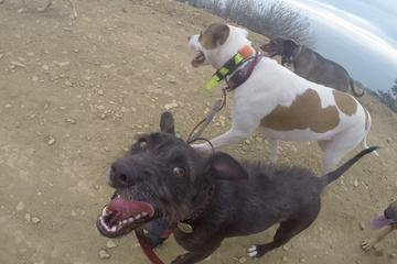 Pet Friendly Colin's Pack