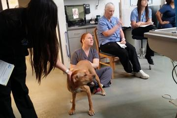 Pet Friendly East Maryland Animal Hospital