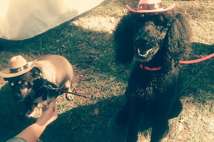 Pet Friendly Homemade Hounds