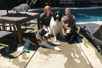 Pet Friendly Bowman Animal Hospital and Cat Clinic