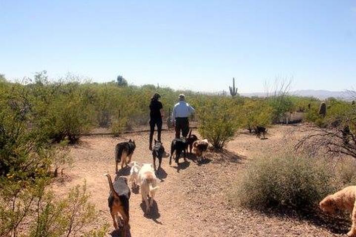 Pet Friendly Tucson Adventure Dog Ranch