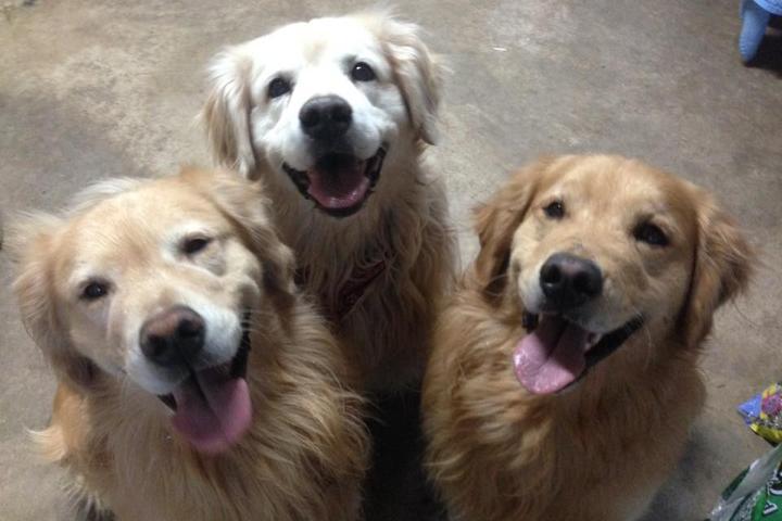 Pet Friendly Lisa's Home Pet Care