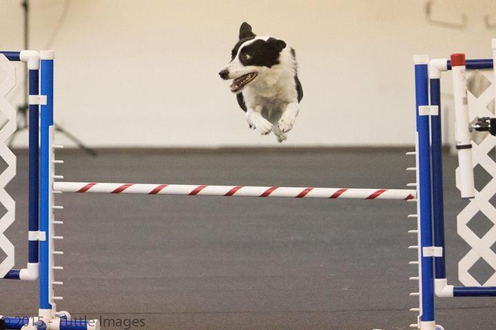 Pet Friendly Canine Affair Center