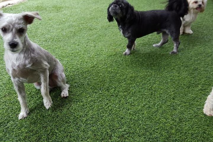 Pet Friendly Pawms Pet Resort