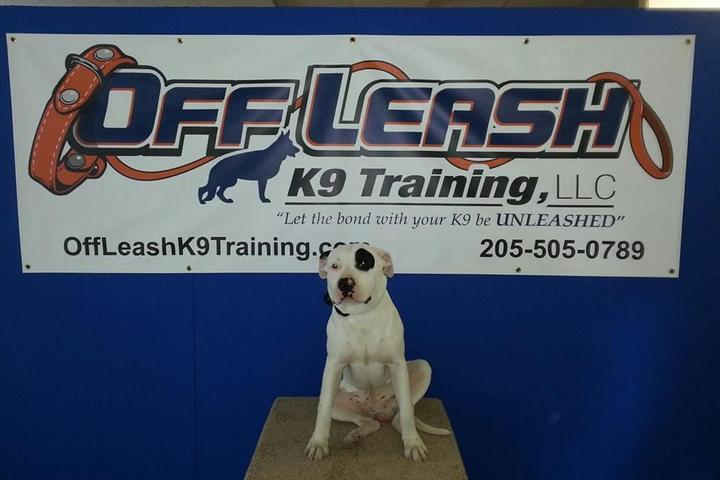 Pet Friendly Off Leash K9 Training