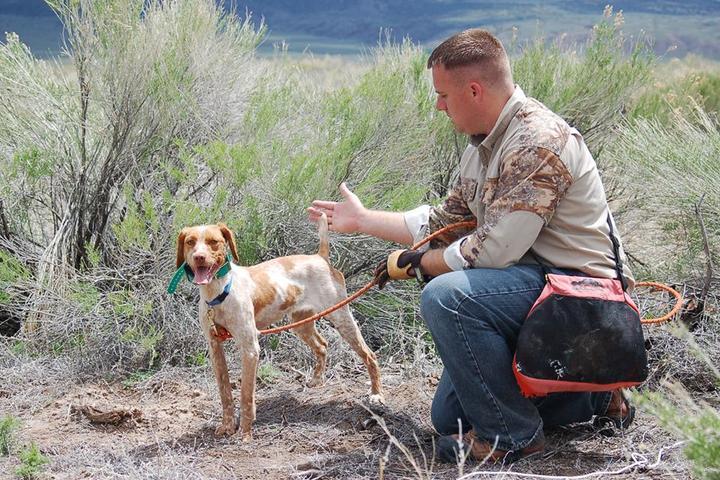 Pet Friendly K9BOSS Dog Training