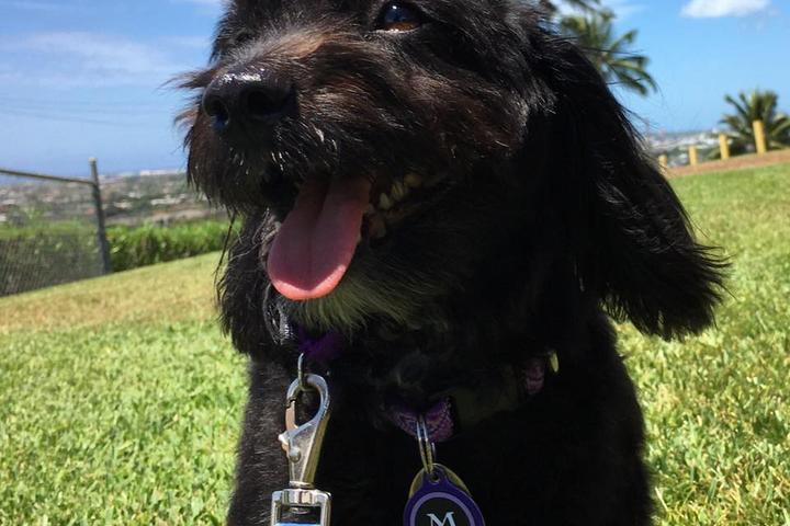 Pet Friendly VIPaws LLC