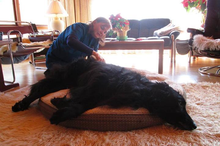Pet Friendly Cherished Companion Mobile Veterinary