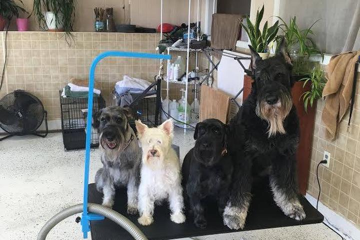 Pet Friendly Pinnacle Pet Spa & More