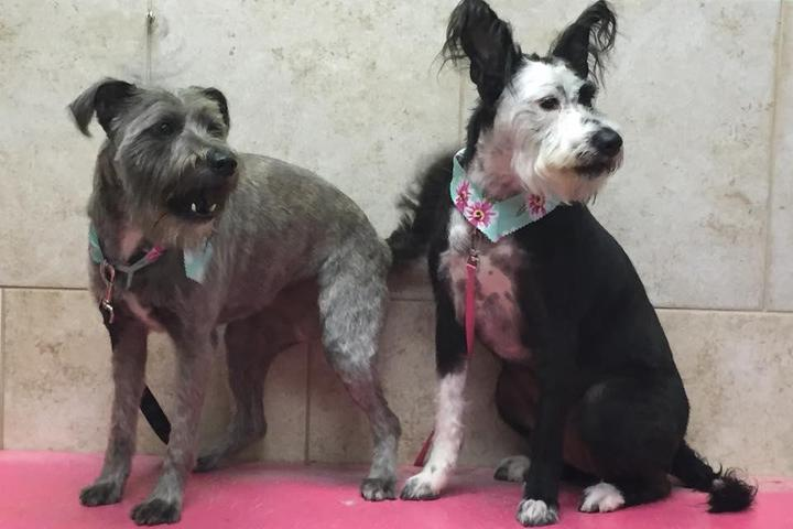 Pet Friendly groomingdales of Naples, inc