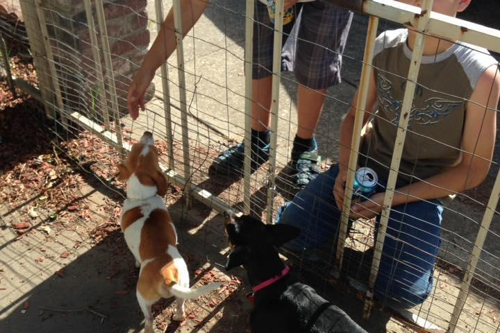 Pet Friendly Haven On Earth Animal Rescue