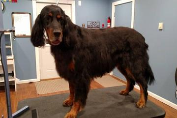 Pet Friendly Paws Up Grooming Salon