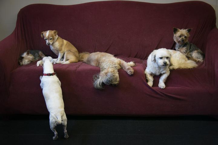 Pet Friendly Salty Dog Hound Lounge
