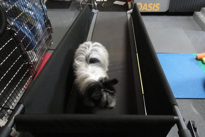 Pet Friendly ARCC -- Animal Rehab & Conditioning Center