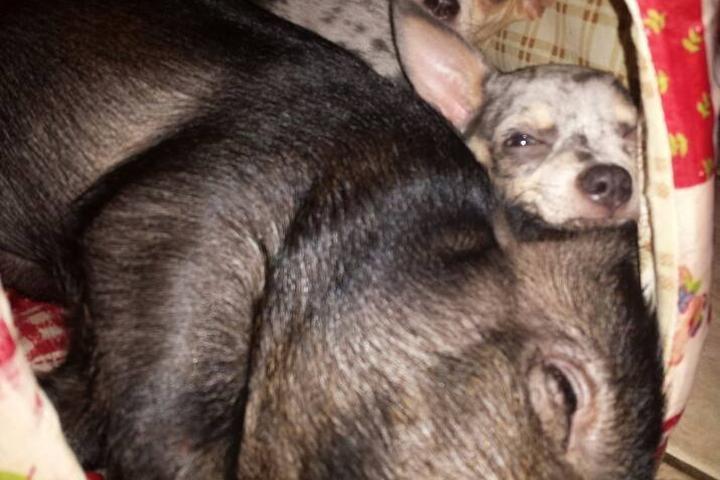Pet Friendly Your Doghouse, LLC