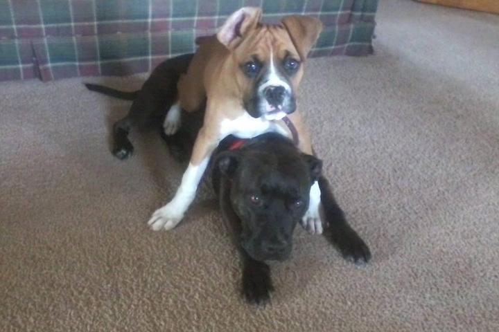 Pet Friendly The Balanced Dog, LLC