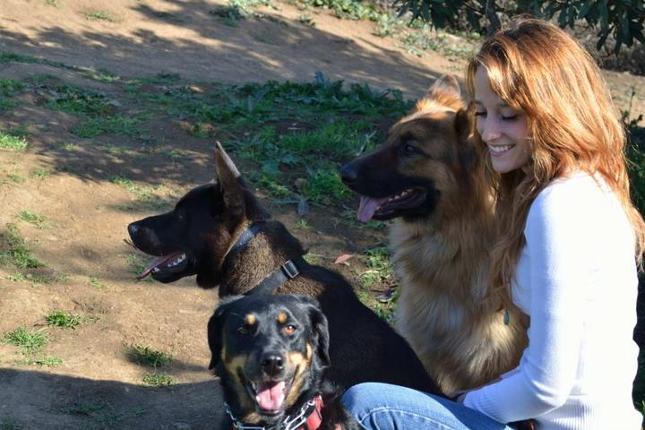 Pet Friendly Holy Sit Dog Training