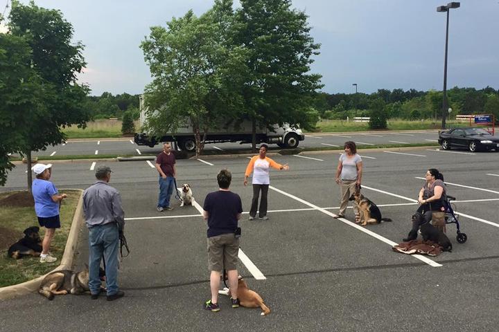 Pet Friendly Bully Brigade & ALL Training