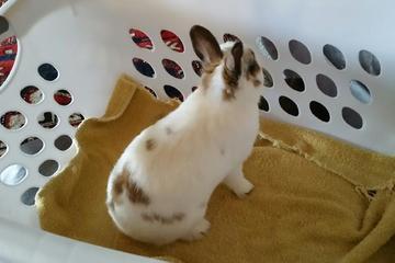 Pet Friendly Animal Medical Clinic Fullerton