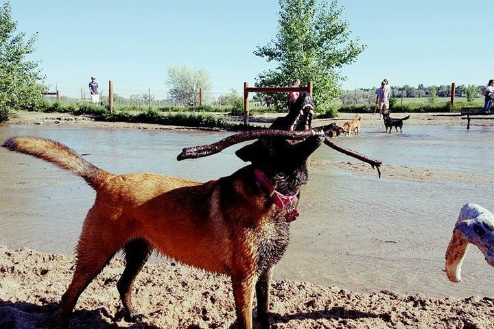 Pet Friendly Wagging Pawsibilities Dog Training, LLC