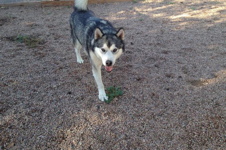 Pet Friendly Broadview Kennels, Grooming & Training