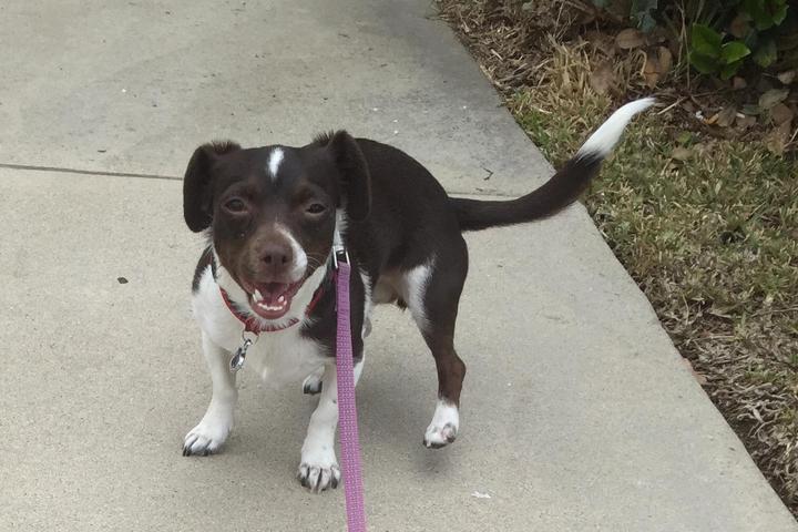 Pet Friendly Craig's Crazy Critters Dog Walking & Pet Sitting