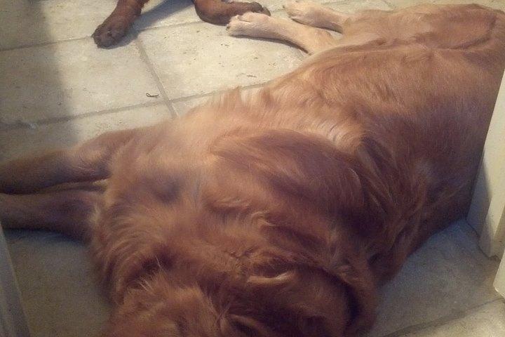 Pet Friendly Infinity Dog Training