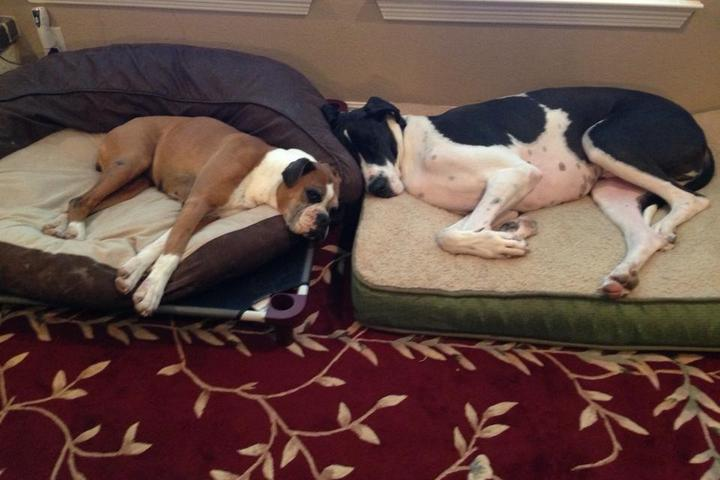 Pet Friendly While You're Away Pet Sitting