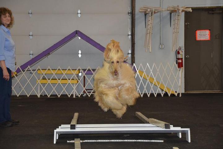 Pet Friendly Obedience Dog Training Club of Waterbury
