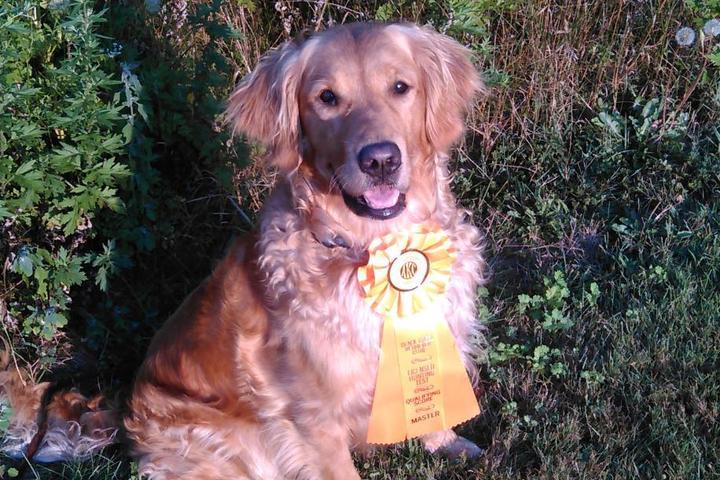 Pet Friendly Premiere Sporting Dog