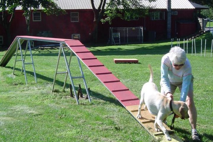 Pet Friendly Pet Behavior Services