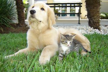 Pet Friendly Animal Medical Center of Mt. Pleasant