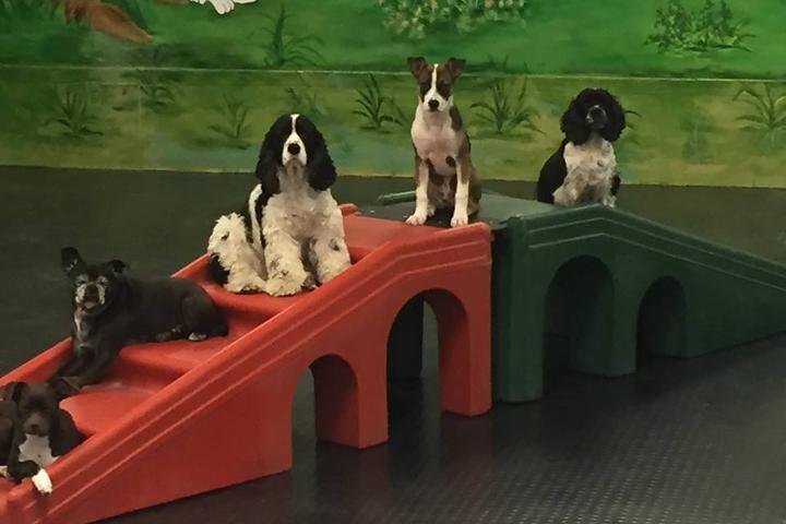 Pet Friendly Barkingham Palace