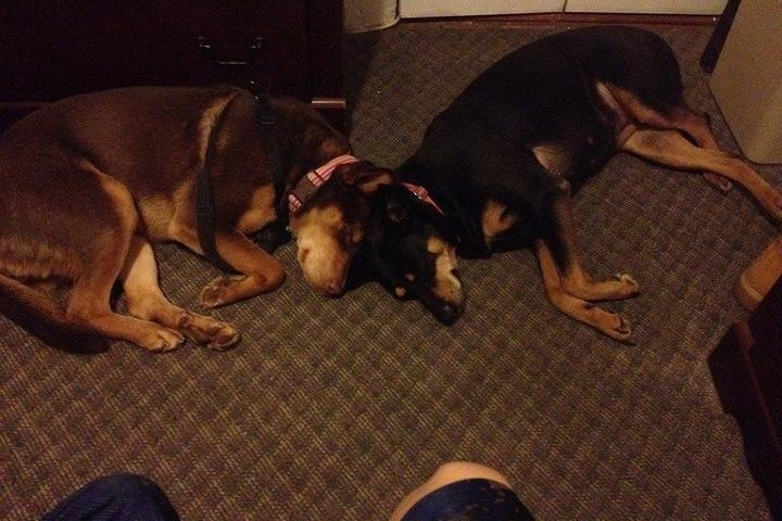 Pet Friendly Strut Your Pup, LLC
