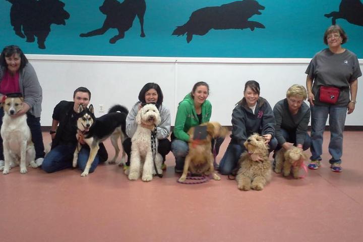 Pet Friendly Phenom-A-Dog