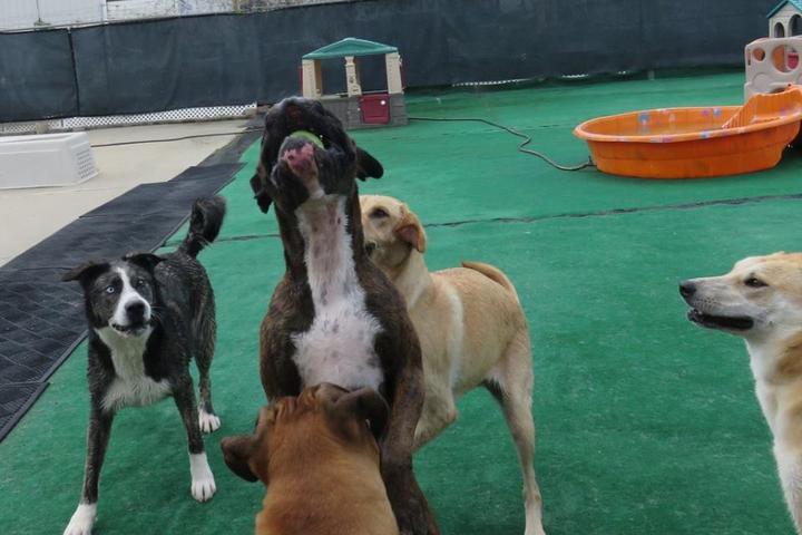 Pet Friendly Voo Dog Daycare