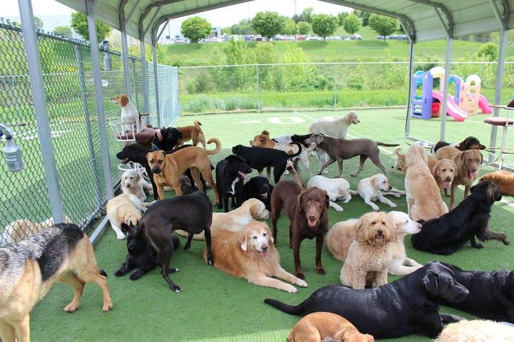 Pet Friendly Canine Clubhouse