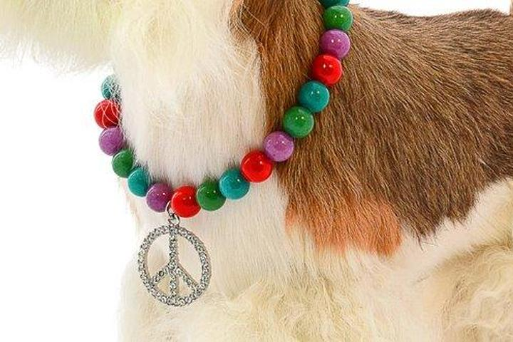 Pet Friendly MhuGhu