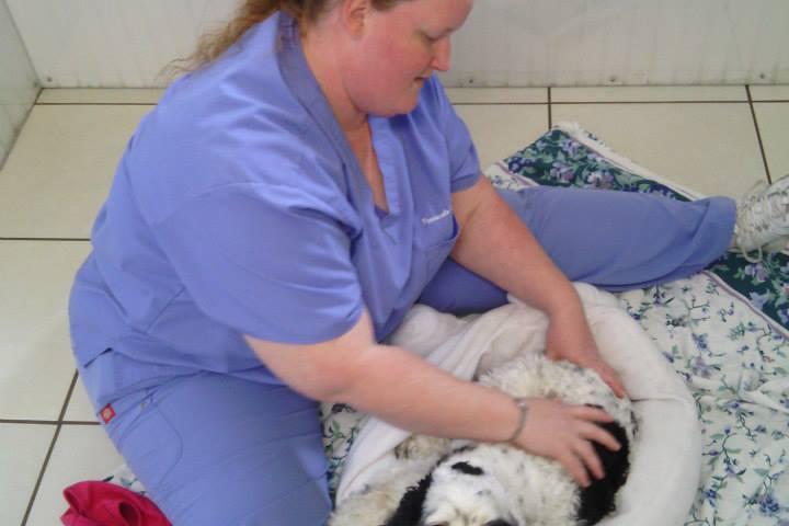 Pet Friendly Pensacola Pet Resort Too