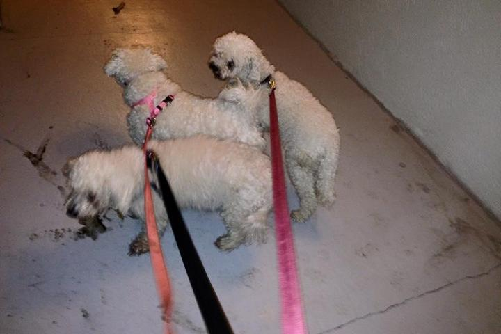 Pet Friendly Jan's Pet Sitting & Dog Walking, LLC