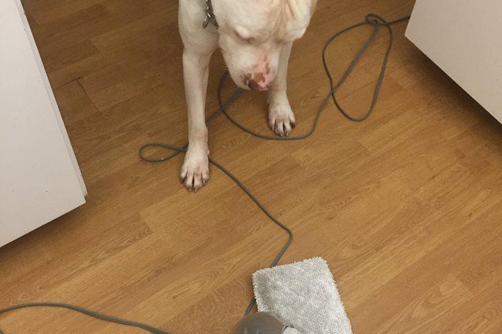 Pet Friendly Amanda's Compassionate Pet Care