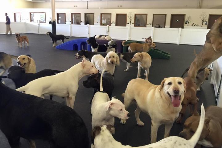Pet Friendly Happy Hound Dog Resorts