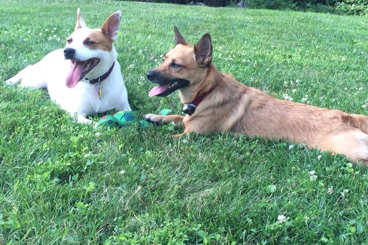 Pet Friendly Barkies - Dog Walks & Pet Care
